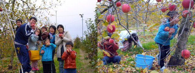 りんごの木のオーナーさん